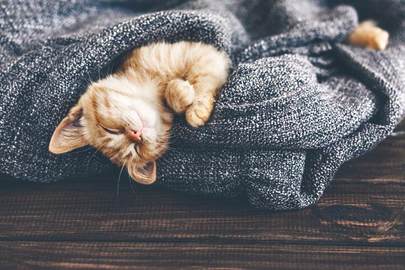 Daylight Savings Sleep Schedule